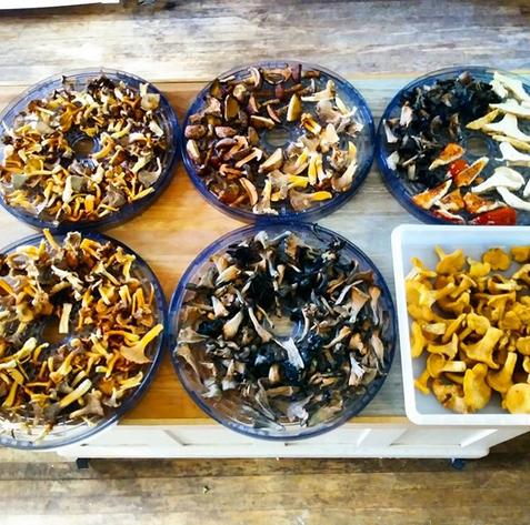 wild mushroom cooking class